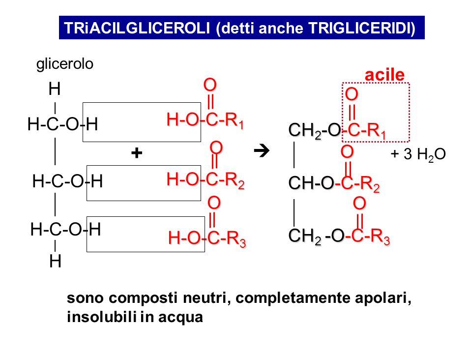 + acile H H-O-C-R1 H-C-O-H CH2-O-C-R1  CH-O-C-R2 H-O-C-R2 CH2 -O-C-R3