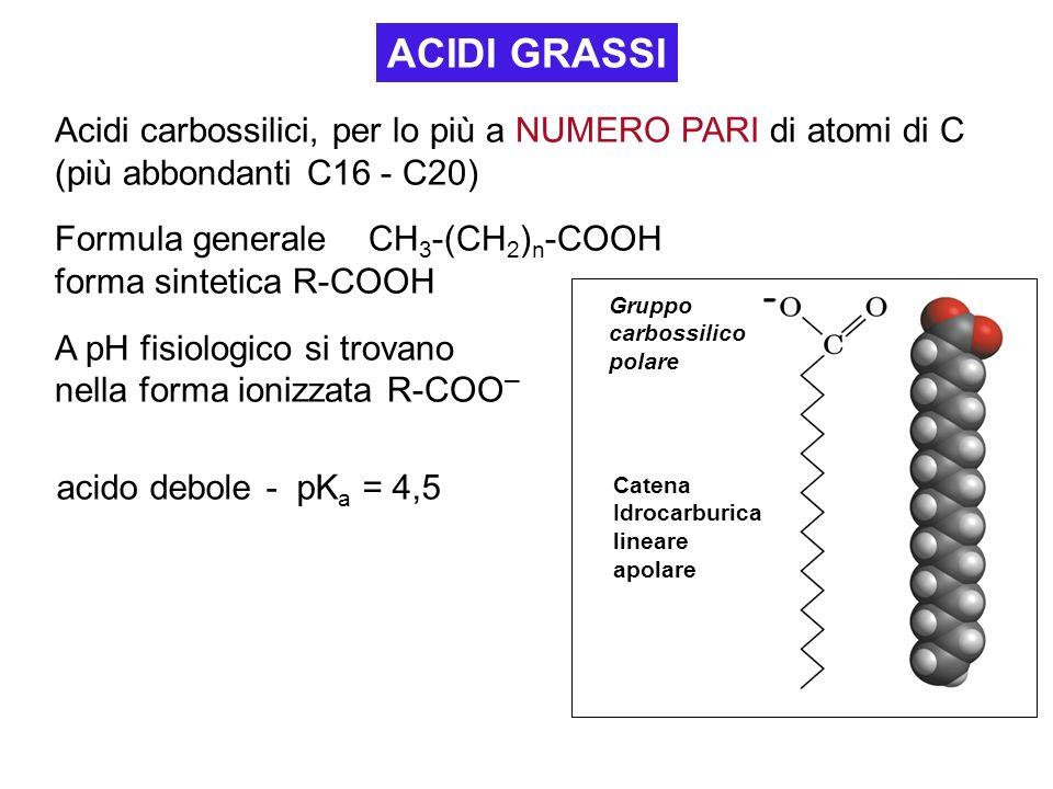 ACIDI GRASSI Acidi carbossilici, per lo più a NUMERO PARI di atomi di C (più abbondanti C16 - C20) Formula generale CH3-(CH2)n-COOH.