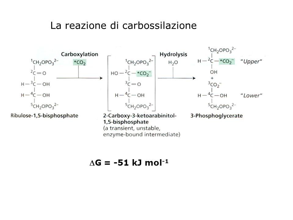 La reazione di carbossilazione