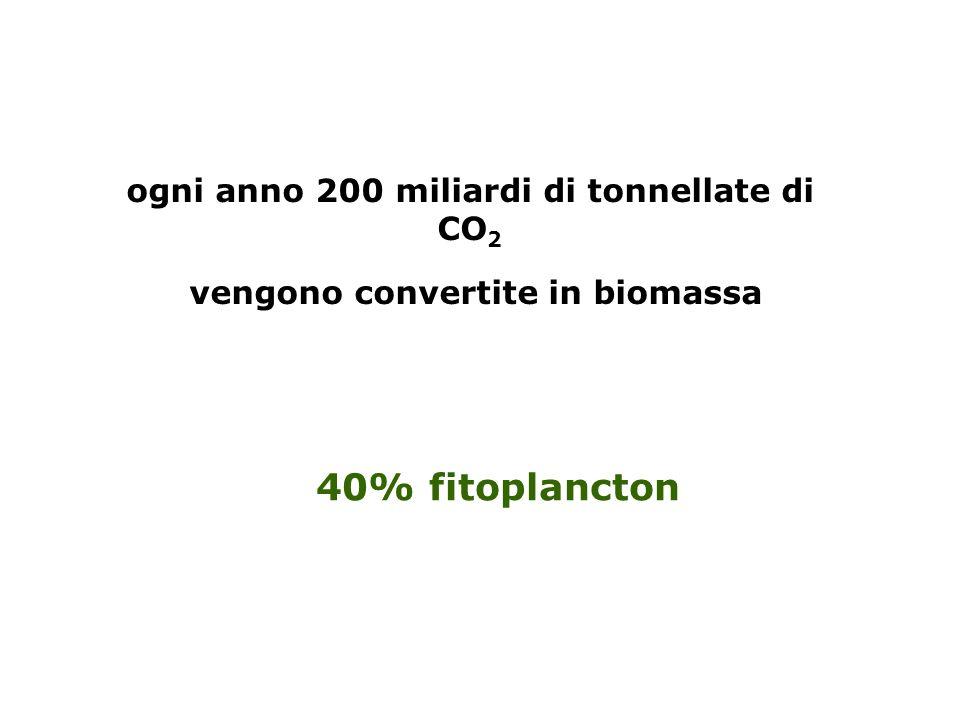 40% fitoplancton ogni anno 200 miliardi di tonnellate di CO2