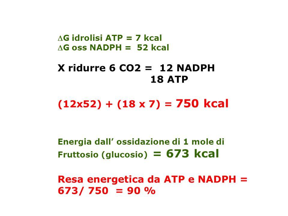 Resa energetica da ATP e NADPH = 673/ 750 = 90 %