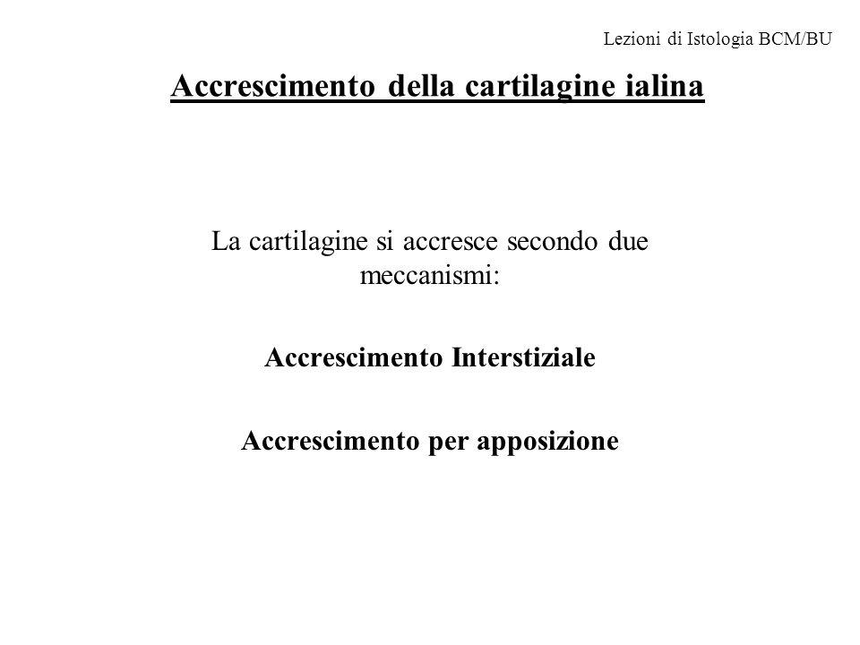 Accrescimento della cartilagine ialina