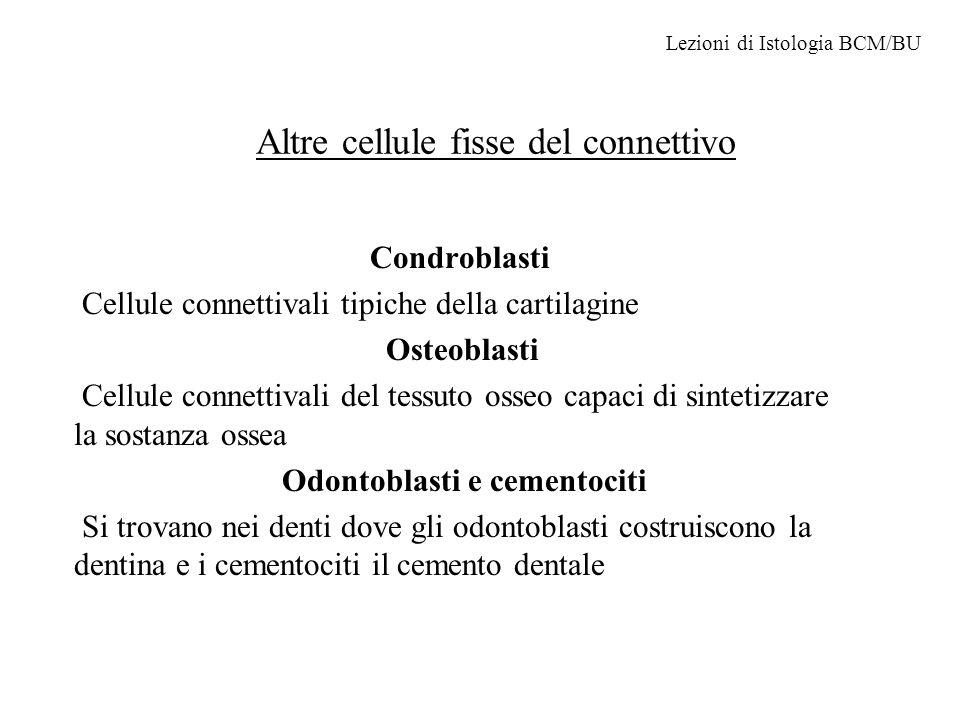 Altre cellule fisse del connettivo