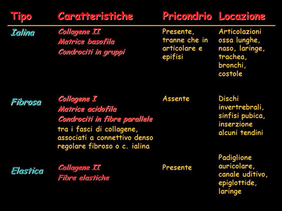 Tipo Caratteristiche Pricondrio Locazione Ialina Fibrosa Elastica