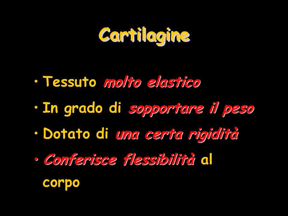 Cartilagine Tessuto molto elastico In grado di sopportare il peso