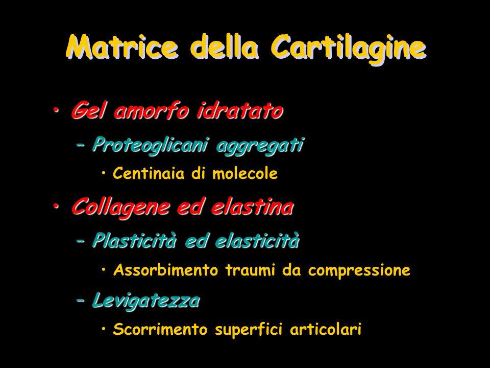Matrice della Cartilagine