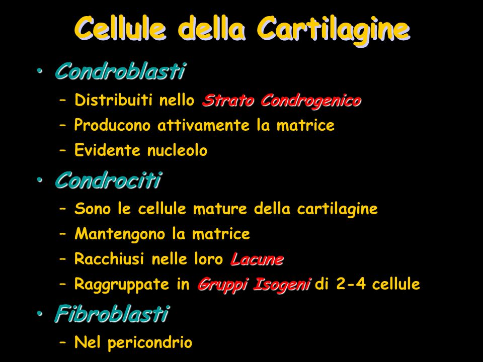 Cellule della Cartilagine