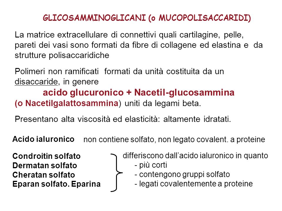 acido glucuronico + Nacetil-glucosammina