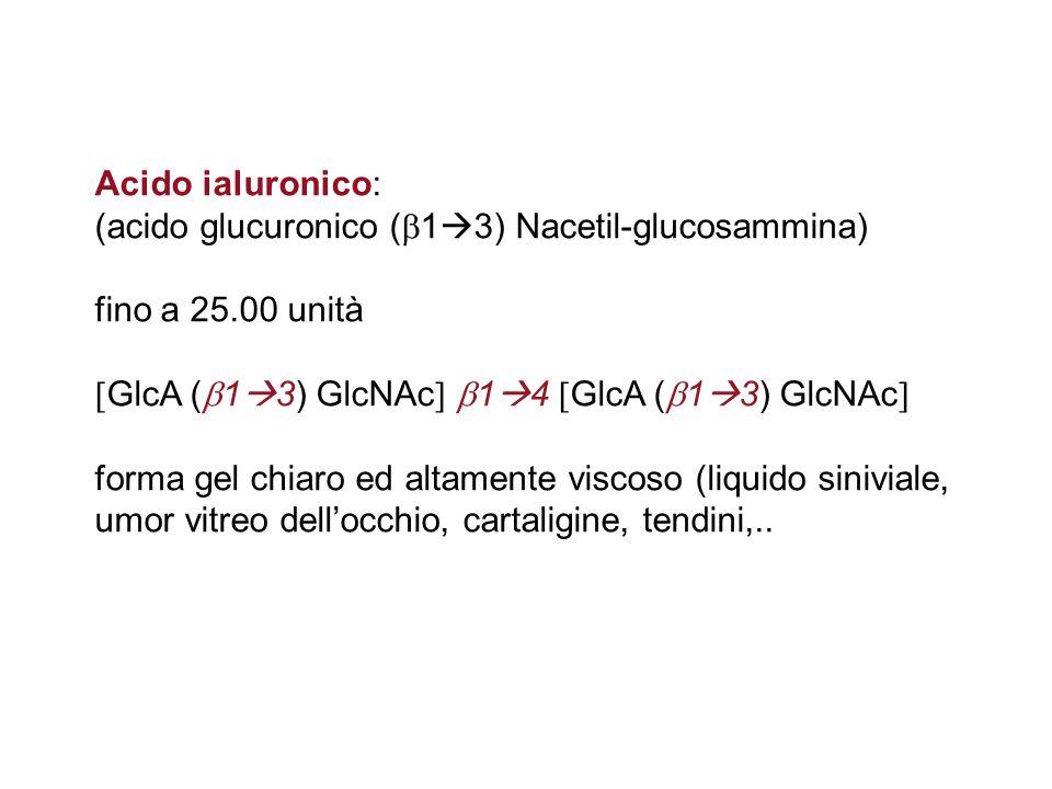 Acido ialuronico: (acido glucuronico (13) Nacetil-glucosammina) fino a 25.00 unità. GlcA (13) GlcNAc 14 GlcA (13) GlcNAc
