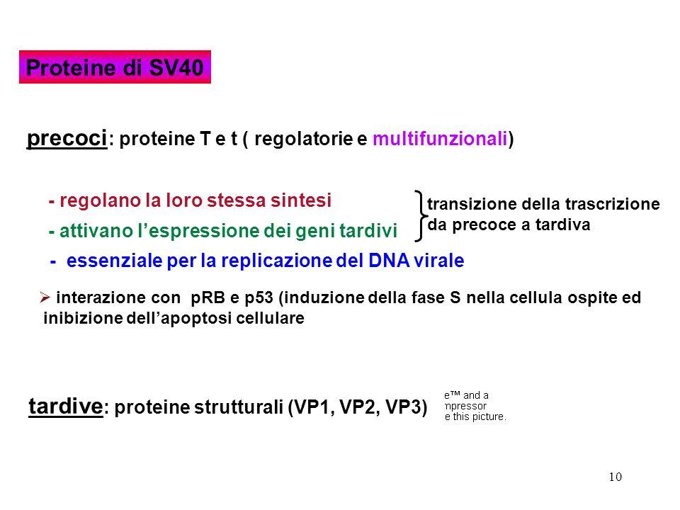precoci: proteine T e t ( regolatorie e multifunzionali)