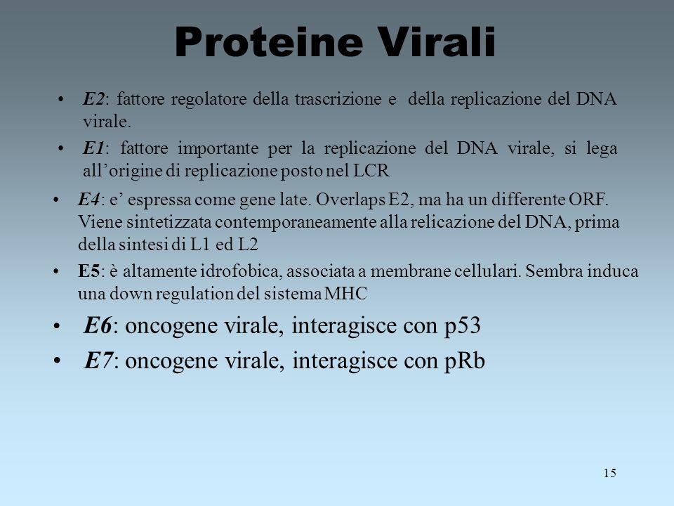 Proteine Virali E7: oncogene virale, interagisce con pRb