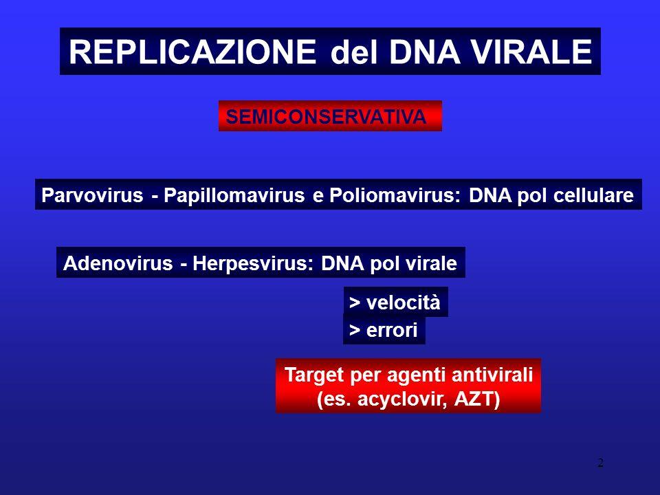 REPLICAZIONE del DNA VIRALE Target per agenti antivirali
