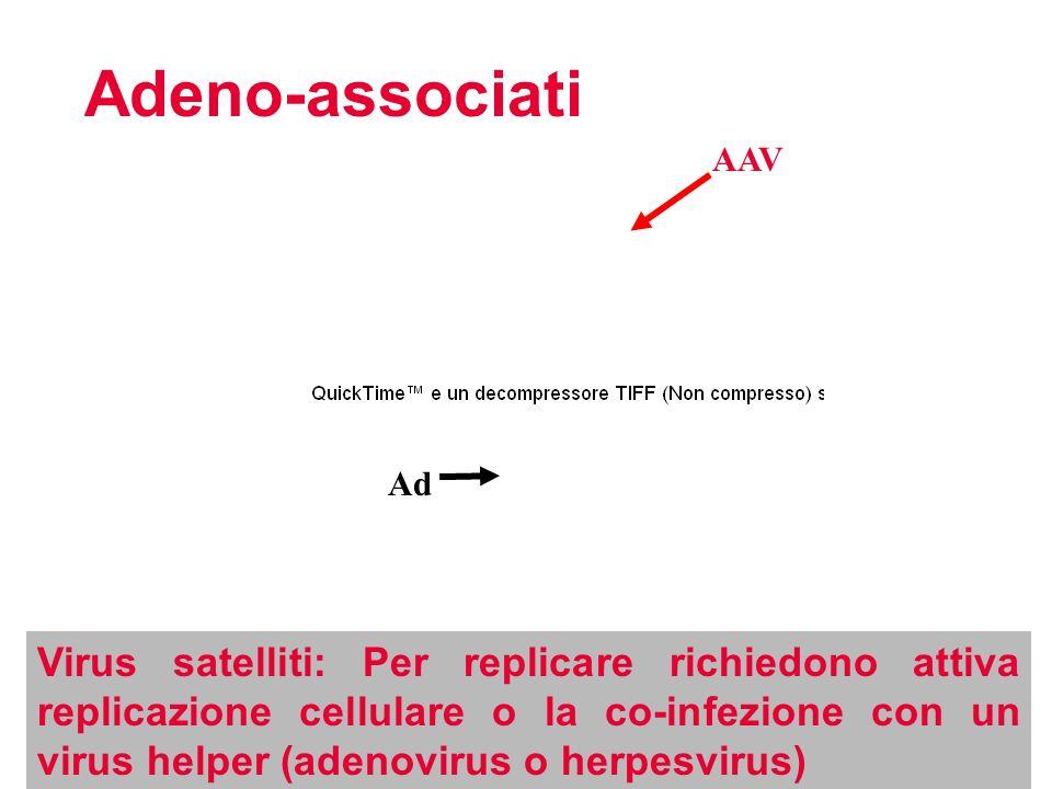 Adeno-associati AAV. Ad.