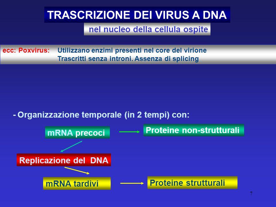 TRASCRIZIONE DEI VIRUS A DNA