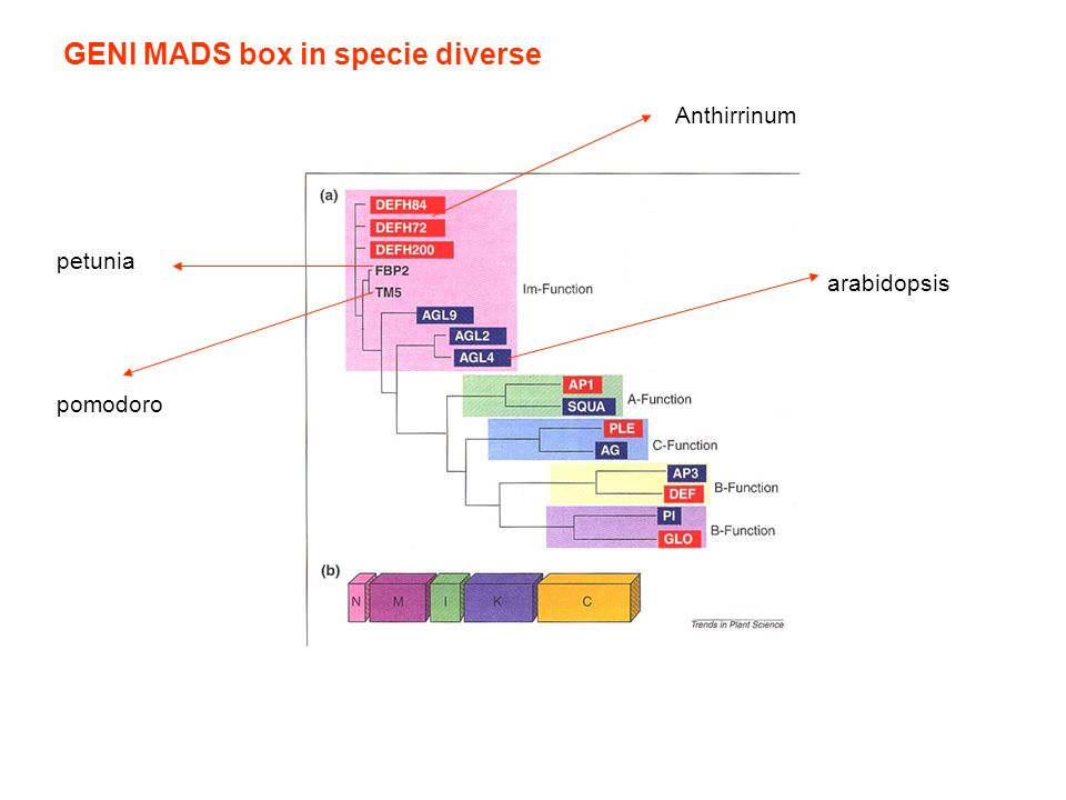 GENI MADS box in specie diverse