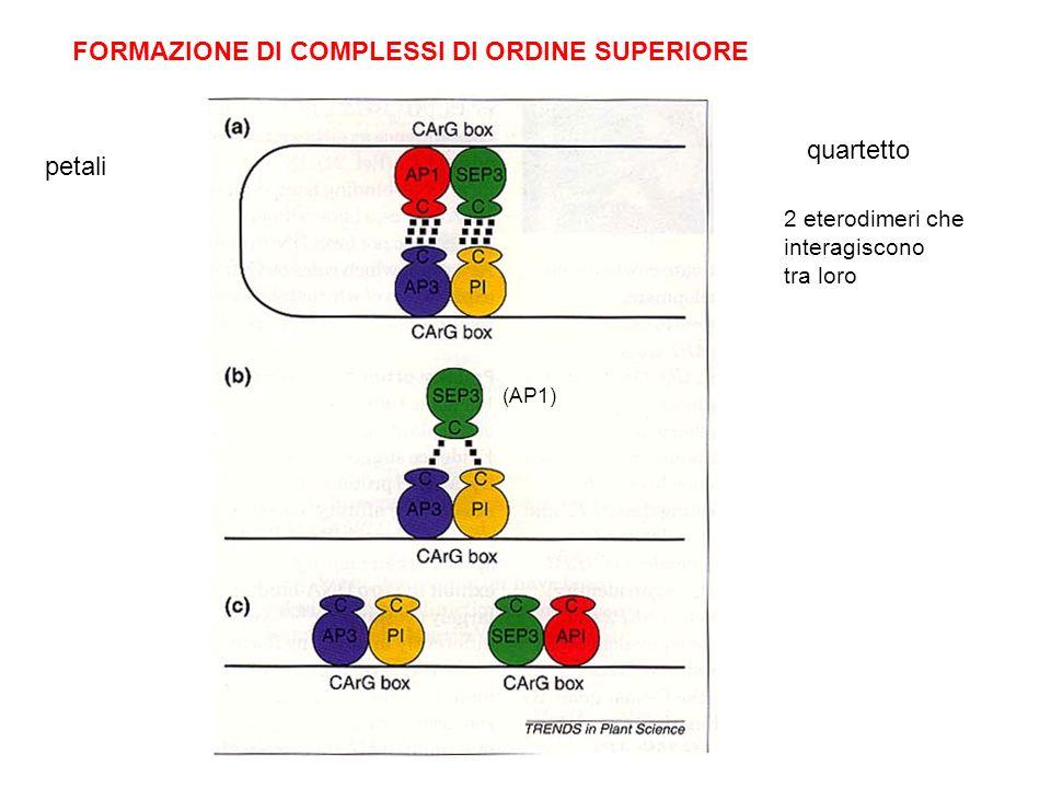 FORMAZIONE DI COMPLESSI DI ORDINE SUPERIORE