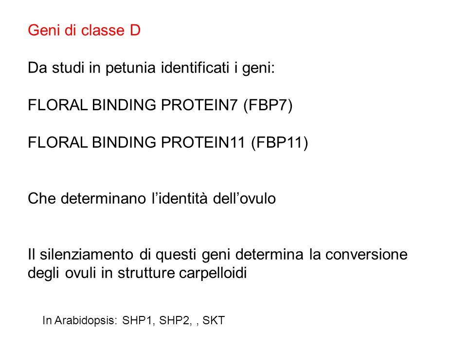Da studi in petunia identificati i geni: