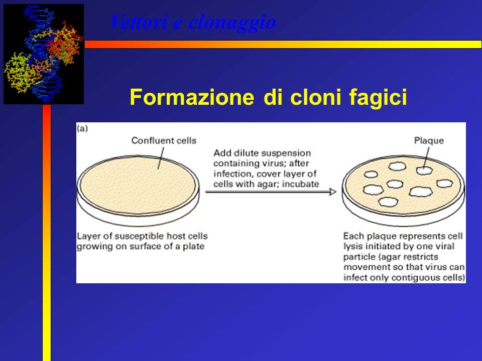 Formazione di cloni fagici