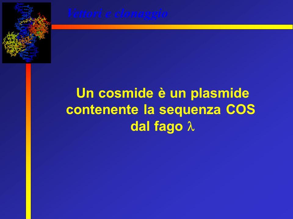Un cosmide è un plasmide contenente la sequenza COS
