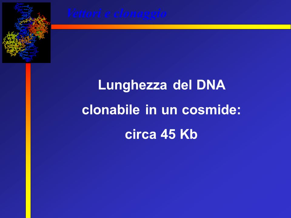clonabile in un cosmide: