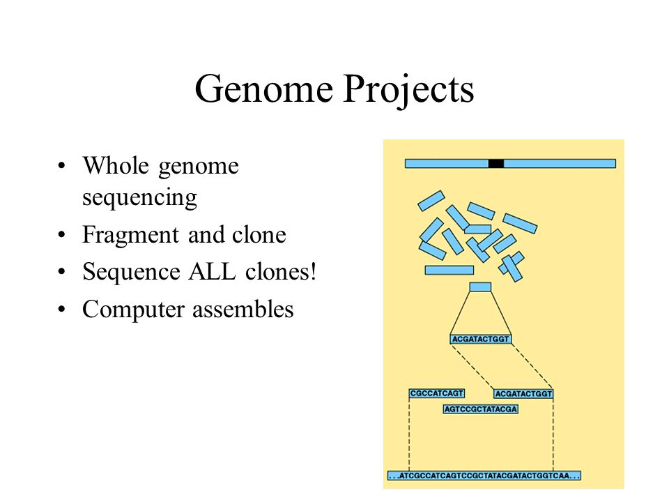 Genome Projects Whole genome sequencing Fragment and clone