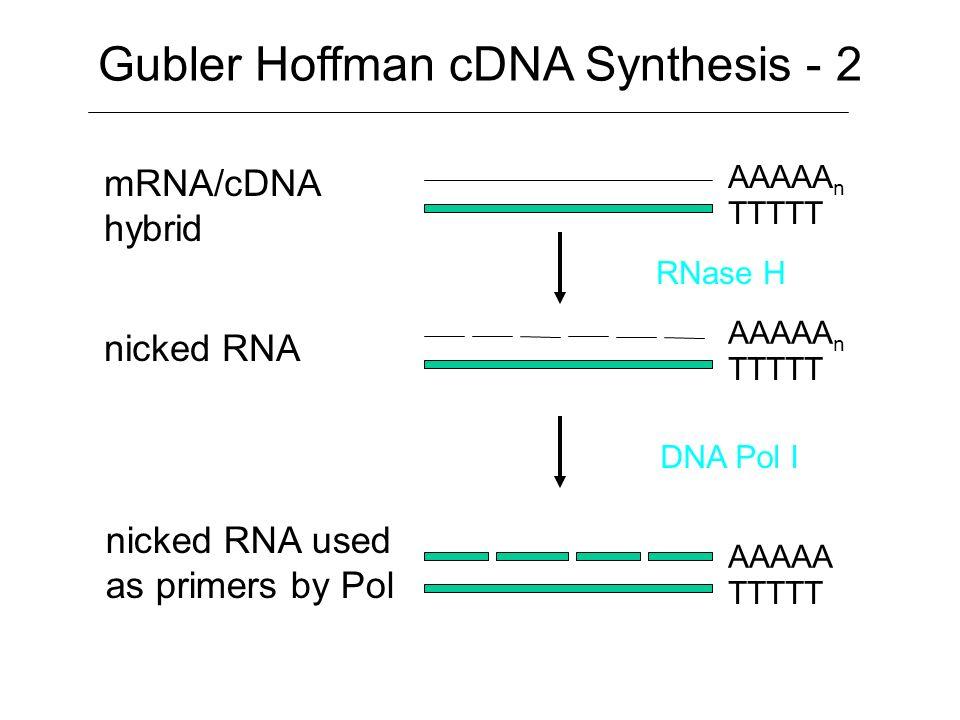 Gubler Hoffman cDNA Synthesis - 2