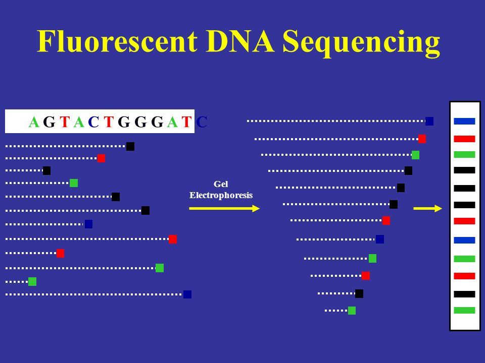 Fluorescent DNA Sequencing