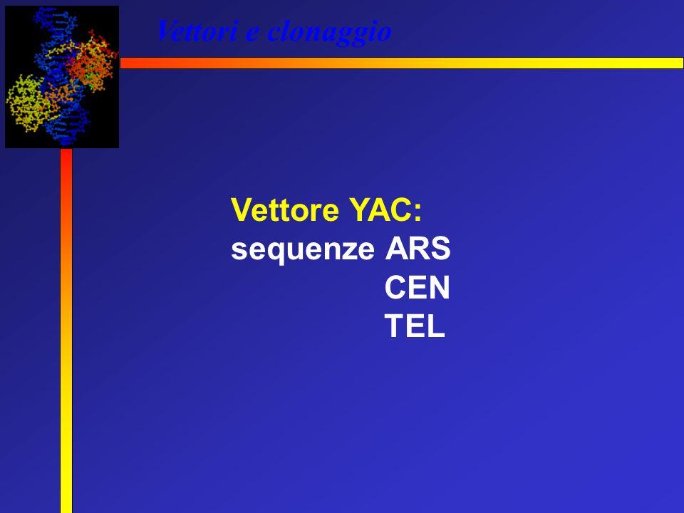 Vettori e clonaggio Vettore YAC: sequenze ARS CEN TEL
