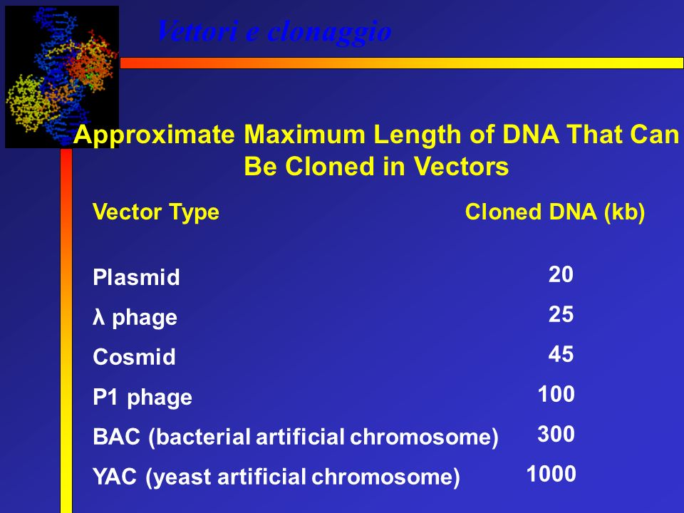 Approximate Maximum Length of DNA That Can Be Cloned in Vectors
