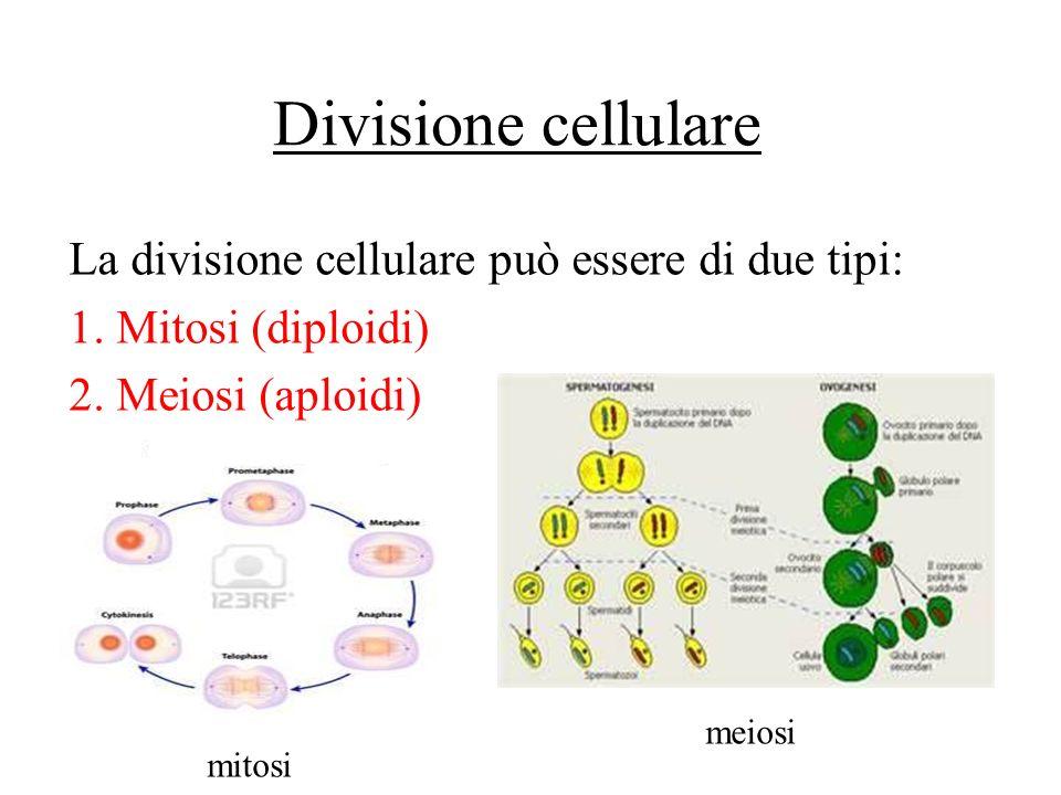 Divisione cellulare La divisione cellulare può essere di due tipi: