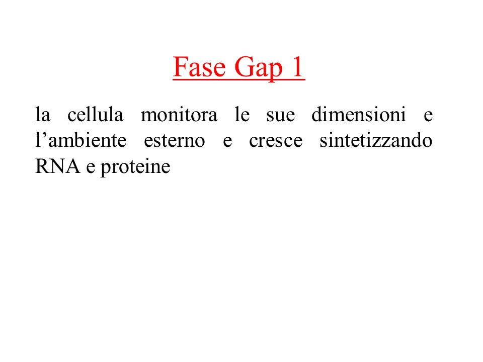 Fase Gap 1 la cellula monitora le sue dimensioni e l'ambiente esterno e cresce sintetizzando RNA e proteine.