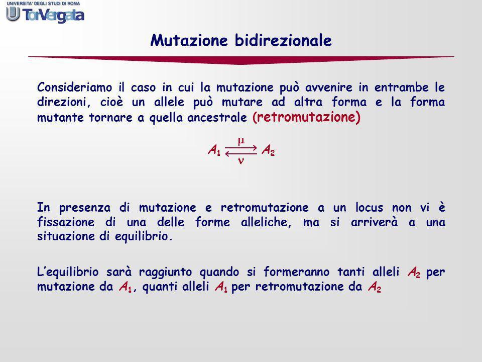 Mutazione bidirezionale