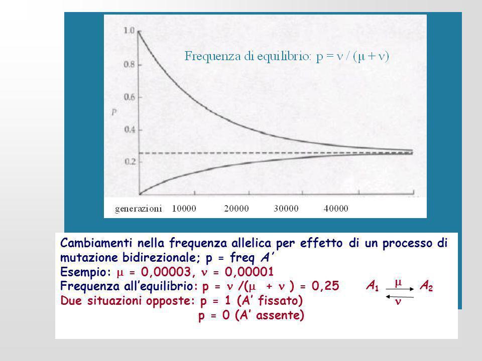 Cambiamenti nella frequenza allelica per effetto di un processo di