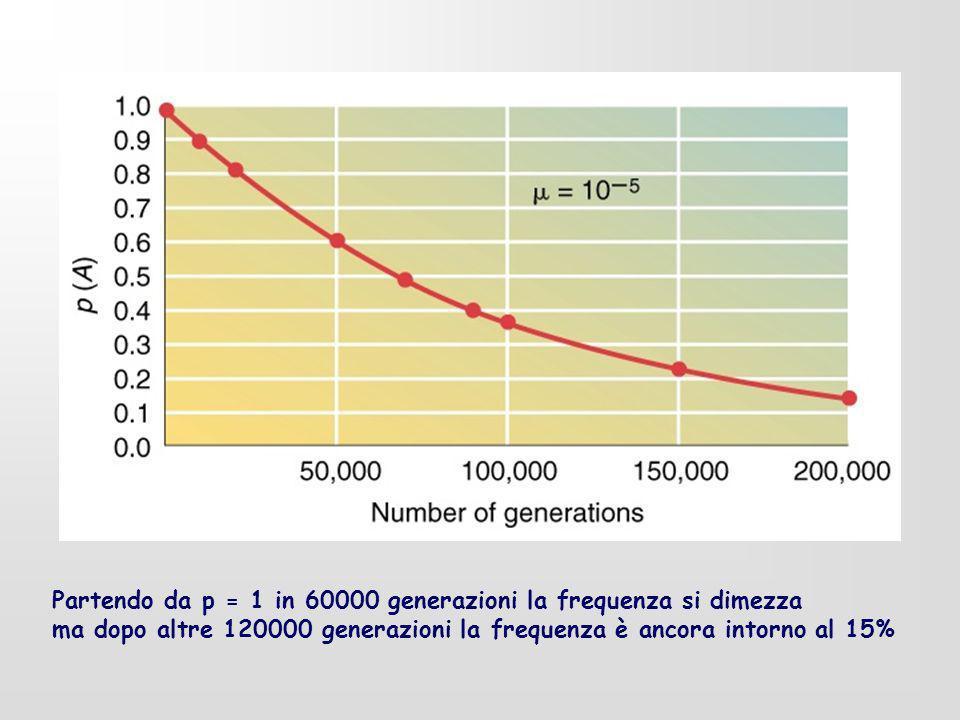 Partendo da p = 1 in 60000 generazioni la frequenza si dimezza