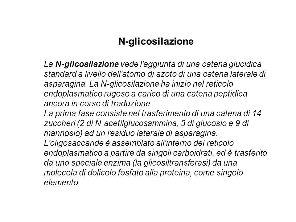 N-glicosilazione