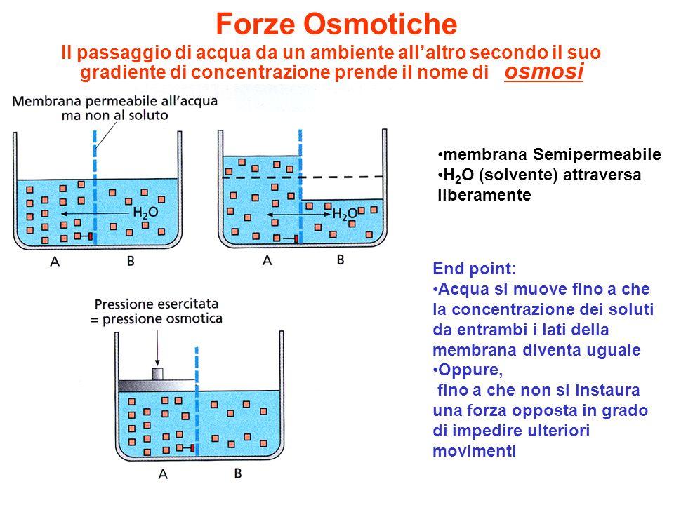 Forze Osmotiche Il passaggio di acqua da un ambiente all'altro secondo il suo gradiente di concentrazione prende il nome di osmosi.