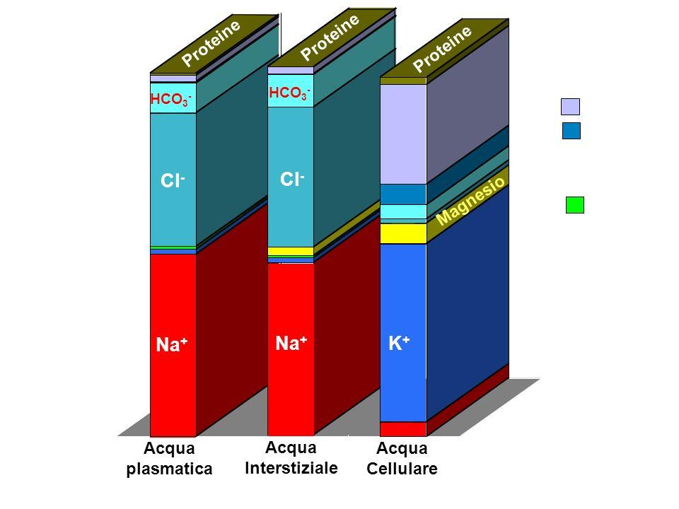 Concentraz. (mEq/l) Na+ Cl- Na+ Cl- K+ fosfati Acqua plasmatica