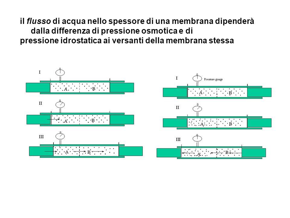 il flusso di acqua nello spessore di una membrana dipenderà dalla differenza di pressione osmotica e di