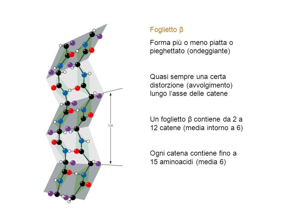 Foglietto β Forma più o meno piatta o pieghettato (ondeggiante) Quasi sempre una certa distorzione (avvolgimento) lungo l'asse delle catene.