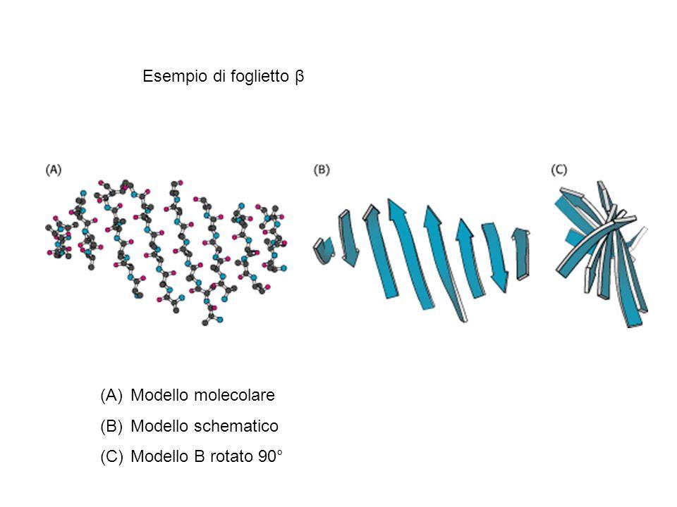 Esempio di foglietto β Modello molecolare Modello schematico Modello B rotato 90°