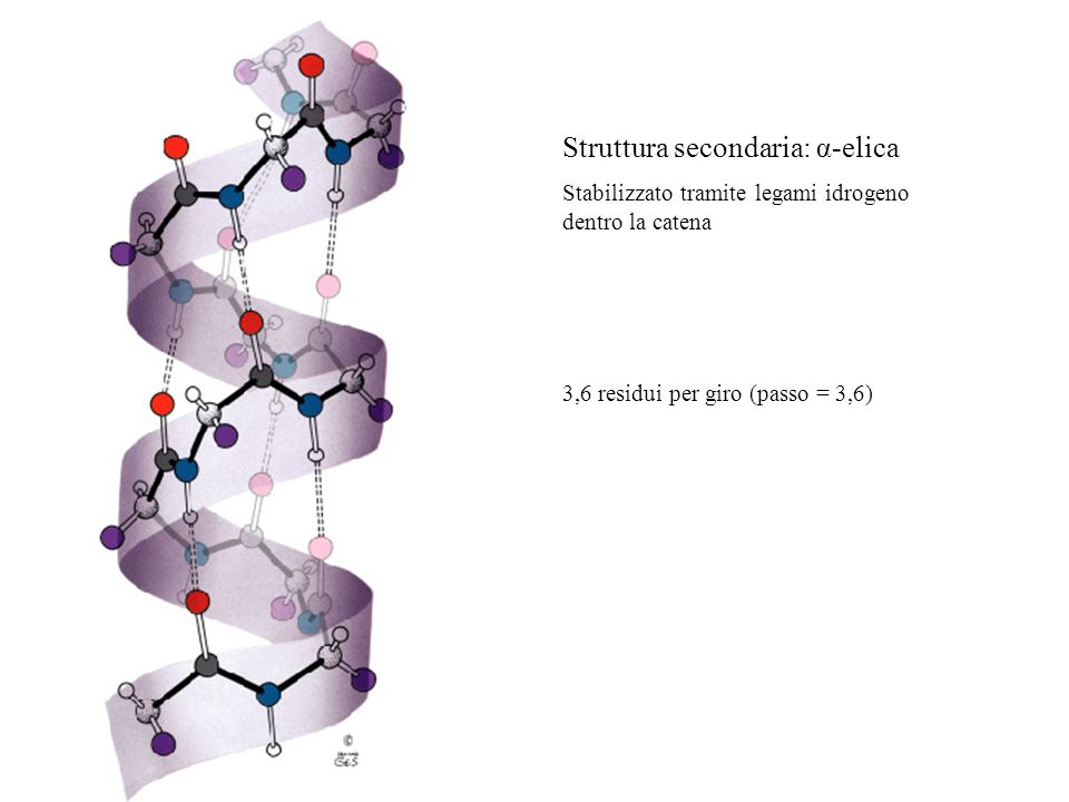 Struttura secondaria: α-elica