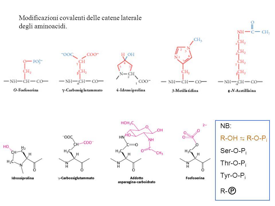 Modificazioni covalenti delle catene laterale degli aminoacidi.