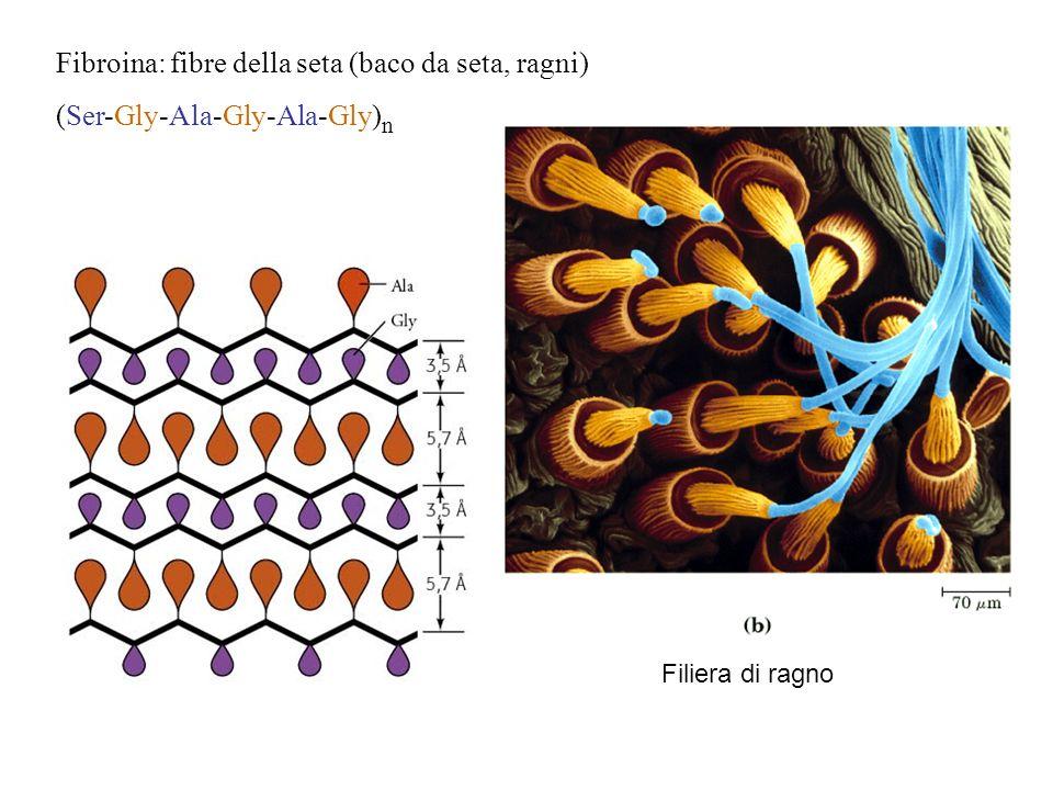 Fibroina: fibre della seta (baco da seta, ragni)