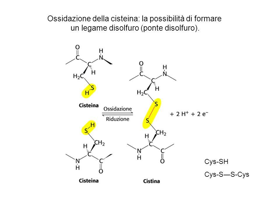 Ossidazione della cisteina: la possibilità di formare