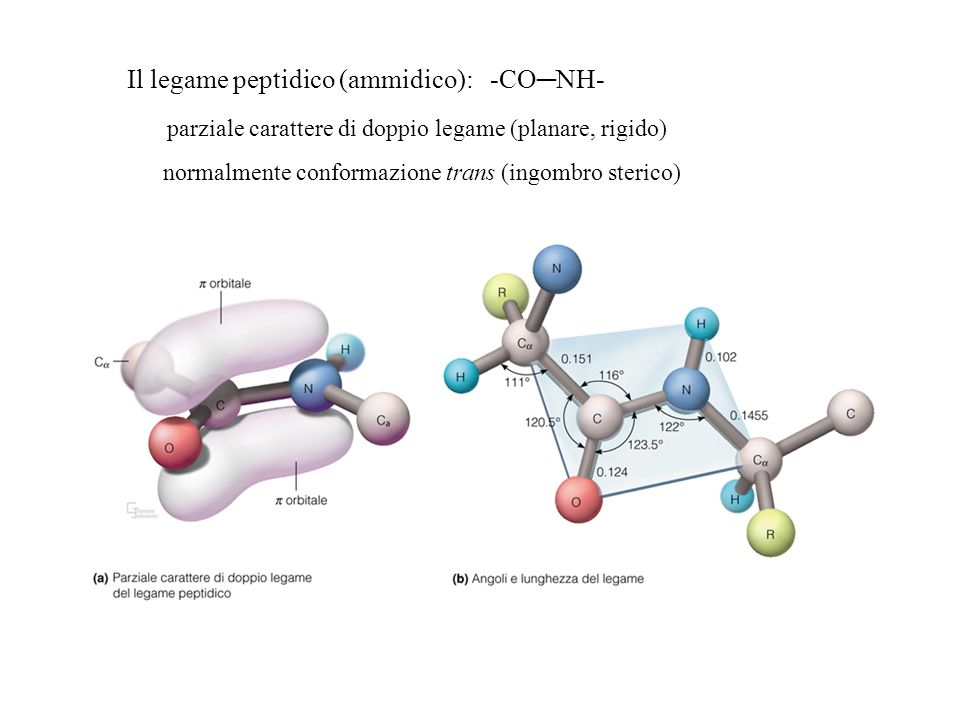 Il legame peptidico (ammidico): -CO─NH-