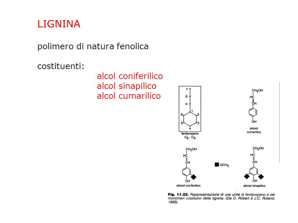 LIGNINA polimero di natura fenolica costituenti: alcol coniferilico