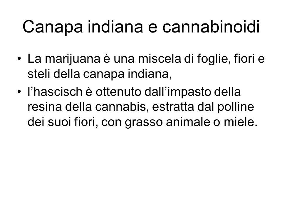Canapa indiana e cannabinoidi