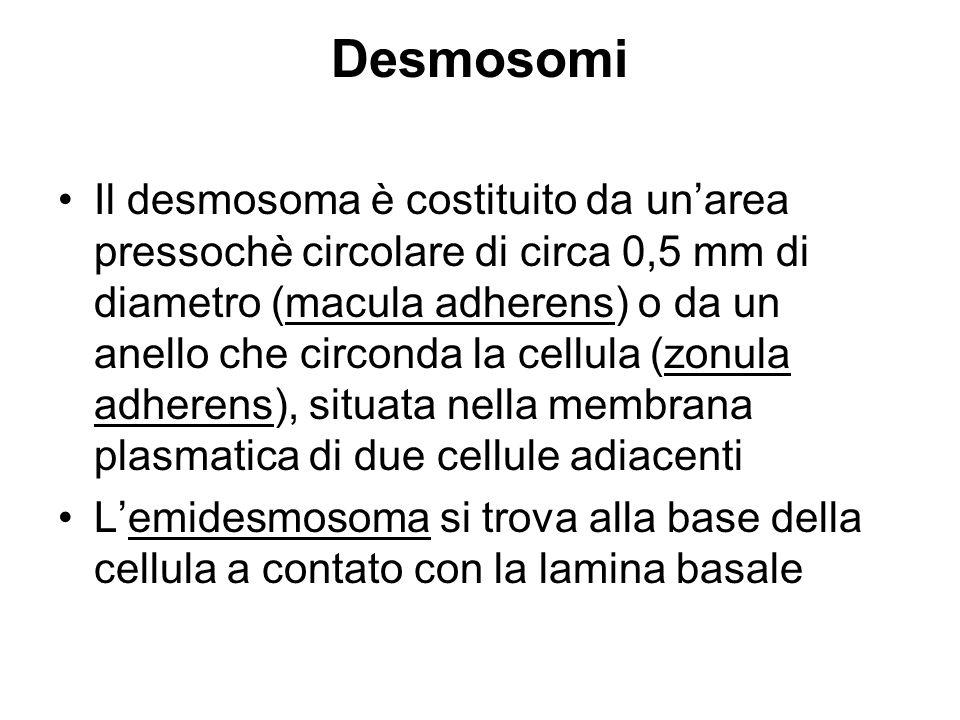Desmosomi