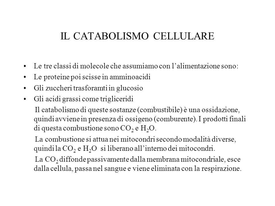 IL CATABOLISMO CELLULARE