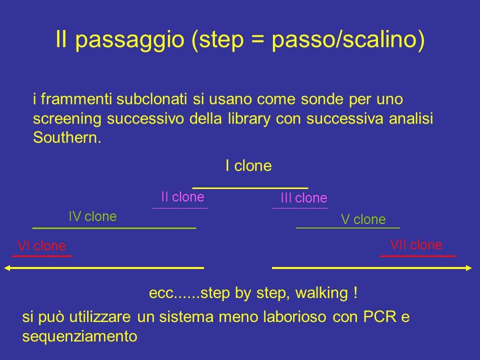 II passaggio (step = passo/scalino)